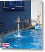 Dolphin Show - National Aquarium In Baltimore Md - 1212200 Metal Print