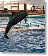 Dolphin Show - National Aquarium In Baltimore Md - 1212212 Metal Print by DC Photographer