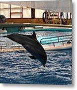 Dolphin Show - National Aquarium In Baltimore Md - 1212215 Metal Print