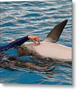 Dolphin Show - National Aquarium In Baltimore Md - 1212231 Metal Print by DC Photographer