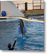 Dolphin Show - National Aquarium In Baltimore Md - 121239 Metal Print by DC Photographer