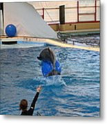 Dolphin Show - National Aquarium In Baltimore Md - 121240 Metal Print by DC Photographer