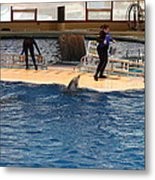 Dolphin Show - National Aquarium In Baltimore Md - 121246 Metal Print by DC Photographer