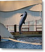 Dolphin Show - National Aquarium In Baltimore Md - 121255 Metal Print by DC Photographer