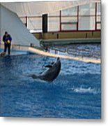 Dolphin Show - National Aquarium In Baltimore Md - 121258 Metal Print by DC Photographer