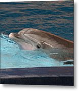 Dolphin Show - National Aquarium In Baltimore Md - 121261 Metal Print by DC Photographer