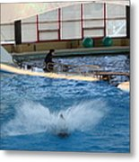 Dolphin Show - National Aquarium In Baltimore Md - 121297 Metal Print by DC Photographer