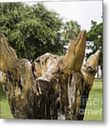 Dolphin Tree In Melbourne Beach Florida Metal Print by Allan  Hughes