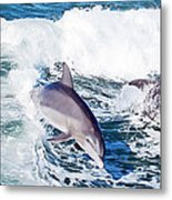 Dolphins Jumping Metal Print