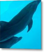 Dolphins Photo Metal Print