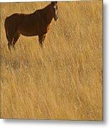 Domestic Horse   #5347 Metal Print
