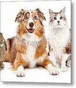 Domestic Pet Composite Metal Print