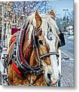 Donald 2 Metal Print by Baywest Imaging
