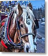 Donald Metal Print by Baywest Imaging