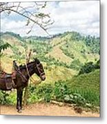 Donkey And Hills Metal Print