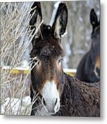Donkey And The Mule Metal Print