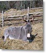 Donkey In Hay Metal Print