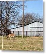 Donkey Lebanon In Oklahoma Metal Print