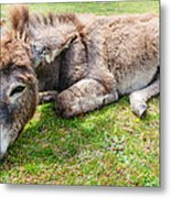 Donkey On Grass Metal Print