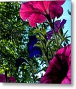 Donna's Blooming Petunias Metal Print