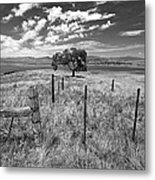 Don't Fence Me In - Black And White Metal Print