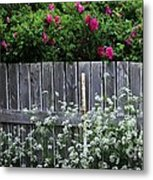 Don't Fence Me In - Wild Roses - Old Fence Metal Print