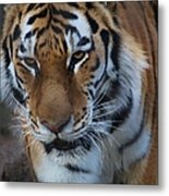 Don't Mess With Me Metal Print