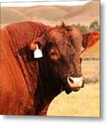 Dont Mess With The Bull Metal Print