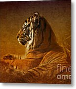 Don't Wake A Sleeping Tiger Metal Print