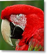 Dont You Dare To Stare Macaw Metal Print