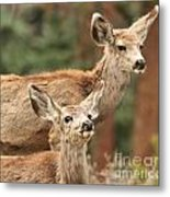 Don't You Tell Mom Metal Print