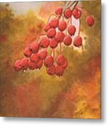 Door County Cherries Metal Print by Rick Huotari