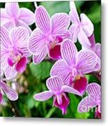Doritaenopsis Flower Metal Print