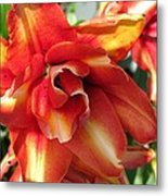 Double Asiatic Lily Named Cocktail Twins Metal Print
