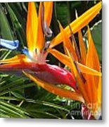 Double Bird Of Paradise - 1 Metal Print