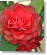 Double Blossom Camelias Metal Print