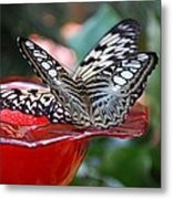 Double Butterfly Metal Print