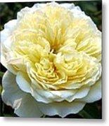Double Cream Rose Metal Print
