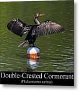 Double Crested Cormorant Metal Print