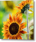 Double Dose Of Sunshine Metal Print