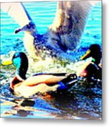Double Dip Duck And See Gull  Metal Print