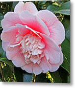 Double Pink Camilla Flower Metal Print