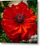 Double Poppy Metal Print