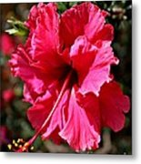 Double Red Metal Print