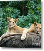 Double Trouble Metal Print