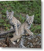 Double Trouble Metal Print by Sandra Bronstein