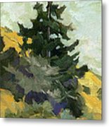 Douglas Fir In Washington Metal Print