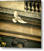 Dove In Flight Metal Print