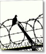 Dove Mourning Metal Print