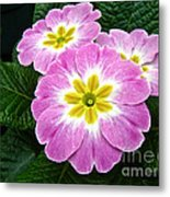 Down On Primrose Lane Metal Print